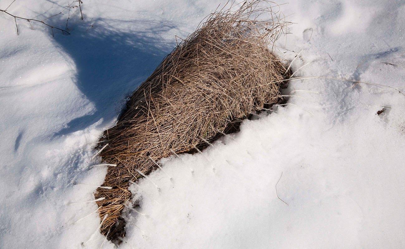 Coser la nieve